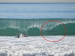 tkA mother in Manhattan Beach, California recently took a picture of her 12-year-old son and his friend surfing and a great white shark appeared in the background.
